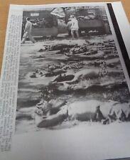 VIETNAM WAR - ORIGINAL PRESS PHOTO - VIET CONG CASUALTIES LOADED ON TRUCKS