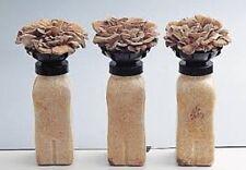MAITAKE Grifola frondosa mushroom mycelium plugs spawn 4 dowels $4.90
