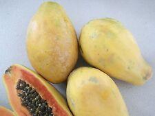 50 semillas de papaya enano de fruta