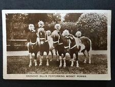 Vintage Circus Postcard - Broncho Bill Midget Ponies