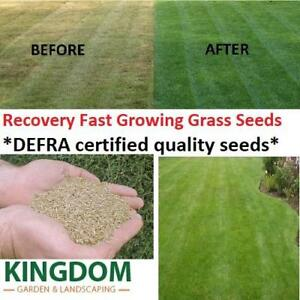 GRASS SEED LAWN SEEDS RECOVERY FAST REPAIR TIRED PATCH LAWNS DEFRA CERTIFIED