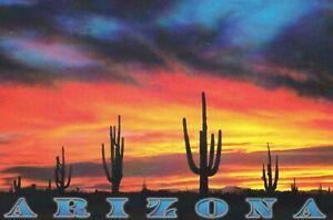 SAGUAROS AGAINST THE SUNSET, Arizona - photo by Janet Hendricks Postcard!