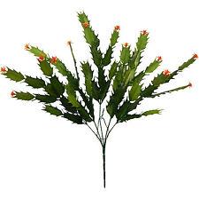 Aloe Vera Cactus & Succulent Plants