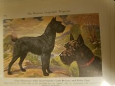 E H Miner GIANT SCHNAUZER Dog Bookplate from 1941 National Geographic Magazine