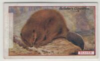 Commercial Value Of The Beaver 90+ Y/O Trade Ad Card