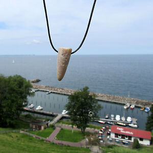 Donnerkeil ( Belemnit ) von der Insel Rügen, am Band mit Erklärungskarte im Set