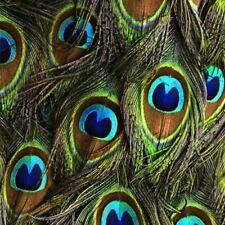 Hoffman Spectrum Digital Print Fabric Proud as a Peacock Feathers Q4513-Peacock