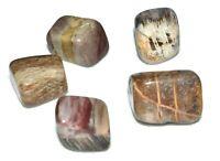 Petrified Wood Tumbled Natural Stone 5 Medium Crystal Quartz Reiki Healing