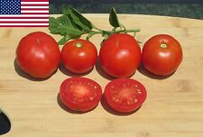Stupice Organic Tomato Seeds- Super Early Heirloom Variety-  40+ 2017 Seeds