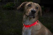 USB Rechargeable LED Pet Dog Cat Collar Adjustable Flashing Night Safety Light