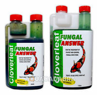 CLOVERLEAF FUNGAL ANSWER INFECTION FUNGUS FIN ROT SORE SAFE TREATMENT KOI POND