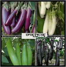 Brinjal Long Eggplant Seeds Combo Pack 4 Variety Mixed Vegetable 200 Seeds Pack