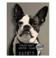 BOSTON TERRIER POLICE MUGSHOT MUG SHOT PRINT 8x10 SEPIA UNFRAMED  CUTE!