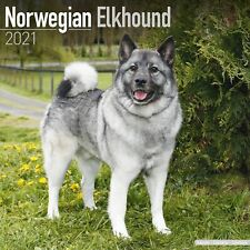 Norwegian Elkhound Calendar 2021 Premium Dog Breed Calendars