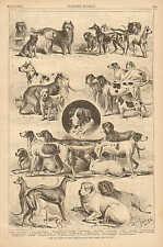 Ny, Dog Show, by Edwin Forbes, Skye Terrier, St. Bernard, Collie, Bull Dog, 1881