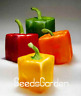 200 PCS Seeds Mixed Orange Green Red Yellow Square Sweet Pepper Bonsai Vegetable