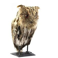 Horned Owl Prop with Feathers