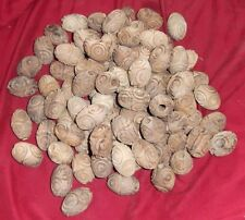 """95 Beautiful Natural Wood Carved Oval Macrame Beads--Approx. 1 1/2"""" X 1"""" beads"""