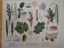 FUNGOID DISEASES OF PLANTS old vintage retro print 1899 inc MILDEW