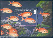 ASCENSION ISLAND REEF FISH SOFTBACK SOLDIER S/S