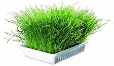Cat Grass Seeds & Tray