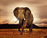 Elephant Animal - Wild Nature Africa Large Wall Art Canvas Picture 20x30inch