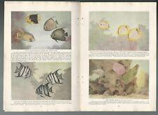 1921 Miami Aquarium & Gulf Stream Fish magazine articles art by Hashime Murayama