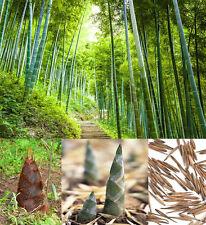 100Pcs Phyllostachys Pubescens Moso-Bamboo Seeds Garden Plants Seeds Decor BG72