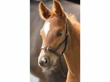 Shires Leather Foal Slips - Havana - Brown - BN