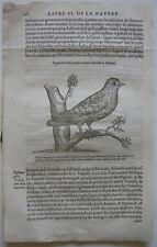 Tórtola Streptopelia turtur ORIG madera corte 1555 Belon ornitología