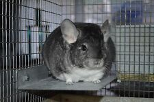 "8""x 6.5"" Cooling Metal Ledge Shelf Galvanized Chinchilla Small Animal Cage"