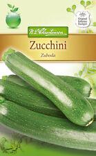 Zucchini 'Zuboda' - Cucurbita pepo, rankenlos, Samen, 4332