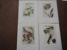 Lot of 40 Vintage Audubon Bird Prints - Warblers, Swallows, Owls, Hawks, etc