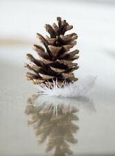 Angel Christmas Card. Modern, contemporary Angel feather & Cone Christmas Card