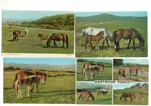 16  postcards:   DARTMOOR PONIES HORSES