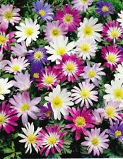 More details for 20 anemone blanda mixed gardening corms corn bulbs spring summer flower plants