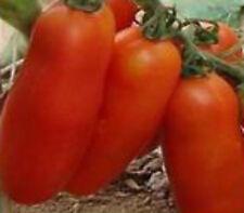 Tomato RAMS HORN unusual long roma type tomato 25 seeds heirloom variety