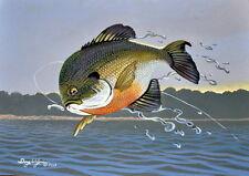 Bluegill Fish Print 11 x 14 by Doug Walpus Freshwater Fishing Acrylic Wall Decor