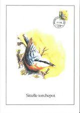 FDC 2294 - Oiseau Buzin sur gravure format A4 !
