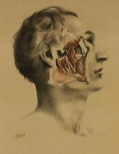 More details for original g ellis 1864 illustration of dissection the face. anatomy lithograph