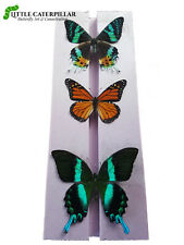 Butterfly Pinning Mounting Spreading Board High Density Polyethyline Entomology