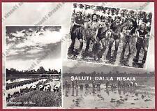 MONDINE 168 MONDARISO RISO Saluti dalla RISAIA AGRICOLTURA Cartolina REAL PHOTO