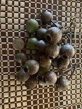 Australian gumnuts (40pack)