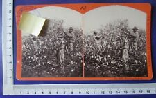 USA Stereo-Fotografie stereoview Louisiana Scenery Picking Cotton S.T. BLESSING