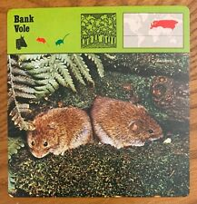 "Bank Vole, 1977 Editions Recontre 4 3/4"" x 4 3/4"" Card"