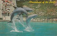 LAM (T) Palos Verdes, CA - Marineland of the Pacific - Dolphin Trio