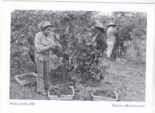 "Postcard-""Picking Crew"" -1972- ..The Fresh Grapes- *Temecula Wine Country (#172)"
