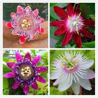 100pcs Passionsblume Samen Garten Rare Passiflora Incarnata Obst Pflanzen Samen