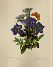 Vintage Redoute Botanical Print Blue Gallery Wall Redoute Art pjr #2001