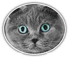 "Scottish Fold Cat Pet Car Bumper Window Locker Sticker Decal 5""X4"""